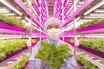 植物照明要爆发 国内外LED植物工厂发展情况如何?