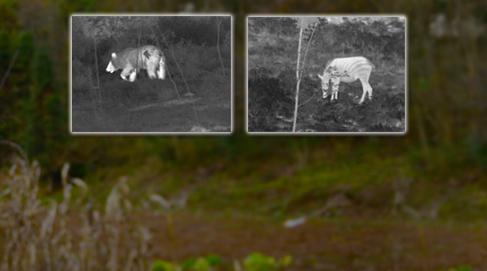 热成像技术在野外动物搜索应用探讨