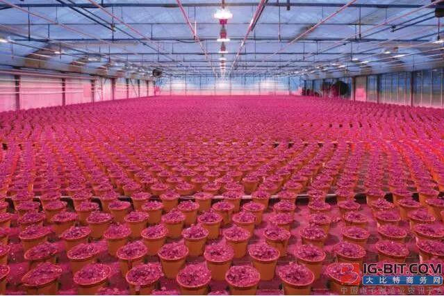 欧司朗园艺LED系列强势K.O传统高压钠灯