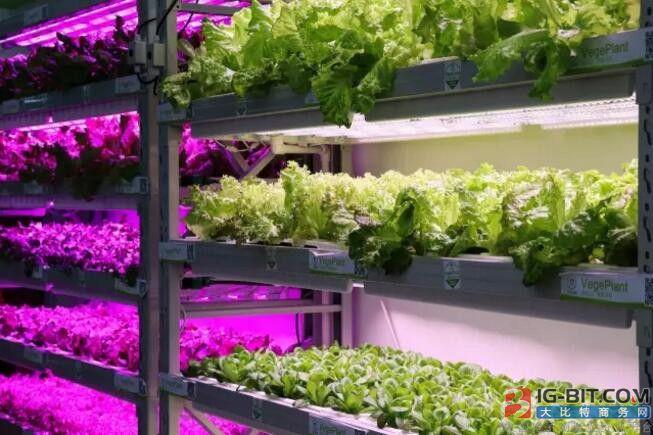 植物工厂,为何万事俱备,只欠爆发?