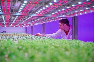 飞利浦植物照明灯进军俄罗斯市场
