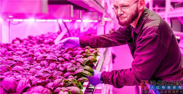 2020年全球植物生长灯市场规模将达30亿