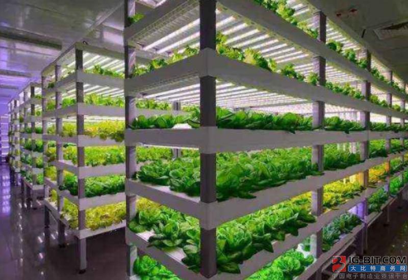 植物工厂促进LED照明发展 或成产业链重要一隅