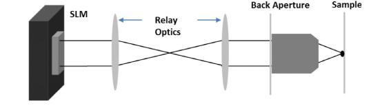 液晶空间光调制器在双光子及三光子显微成像中的应用