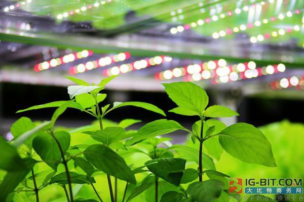 到2027年 基于LED的园艺照明市场将达到38亿美元
