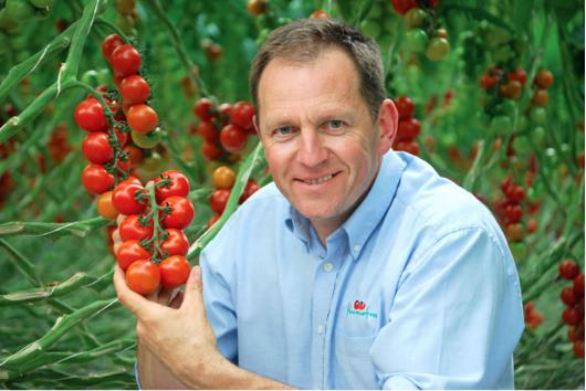 得益于LED照明,英企西红柿冬季保持正常生产