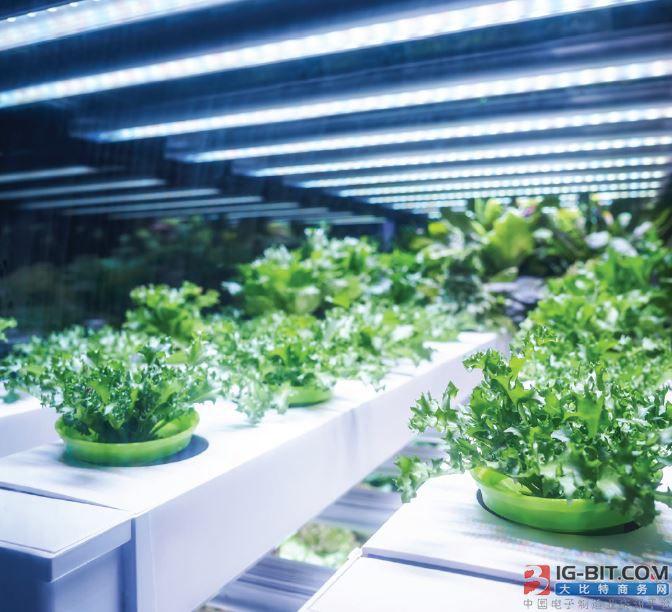智能LED照明从家居走向农业和商业