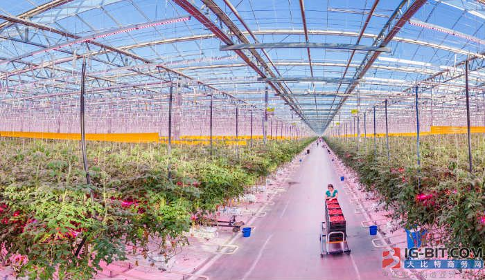 Signify助力,全球最大LED园艺照明项目扩容至68.5公顷