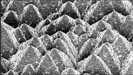 瑞士开发出新的硅-钙钛矿太阳能电池组合技术 效率突破25.2%