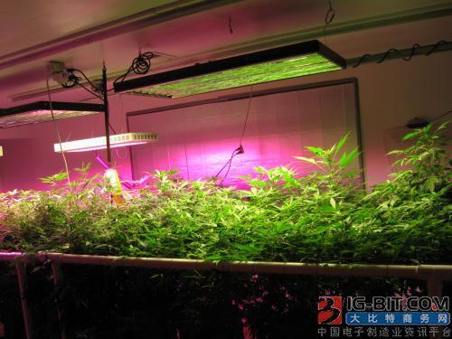 大功率LED价格小幅下调 厂商积极布局植物照明市场