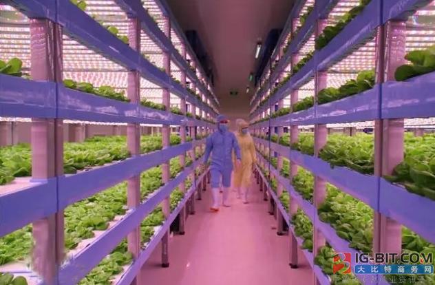 智能化LED植物工厂助力新疆农业发展