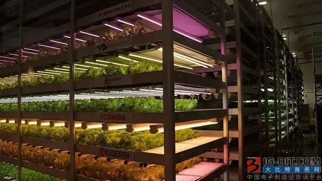 LG子公司正式进军LED植物照明市场