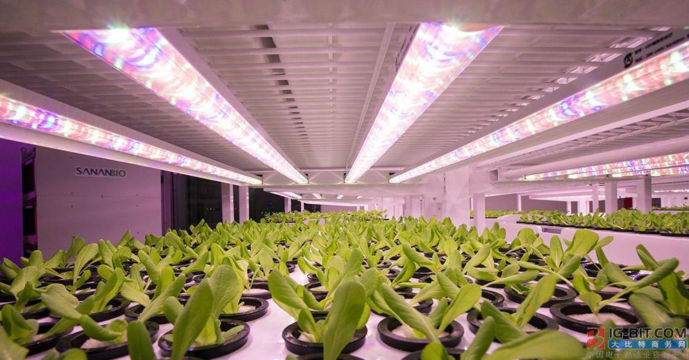 中科三安改良室内LED高科技农场