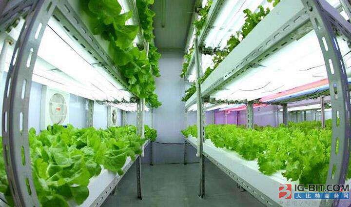 台LED植物工厂产品将营销到北欧各国