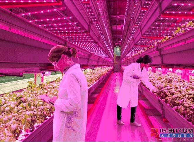 植物照明市场前景看涨,众厂商布局现况一览