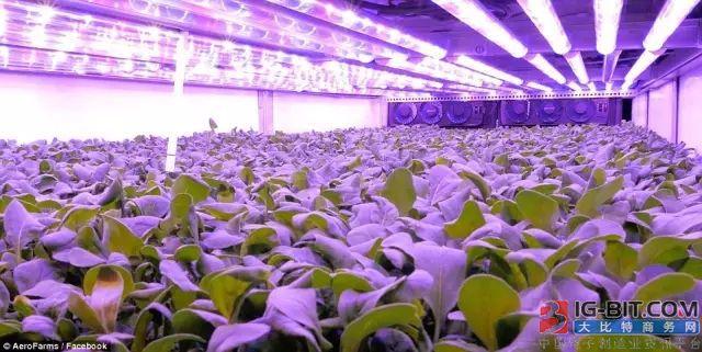 LED植物照明未来发展趋势如何?