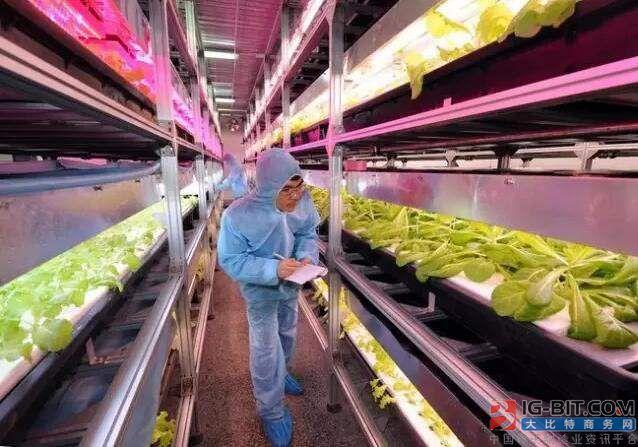 植物照明项目又一个:2.9万平米温室将采用LED生长灯