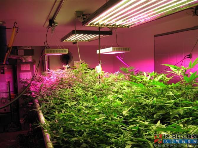 95万元,瑞典垂直农场向Heliospectra购买LED生长灯