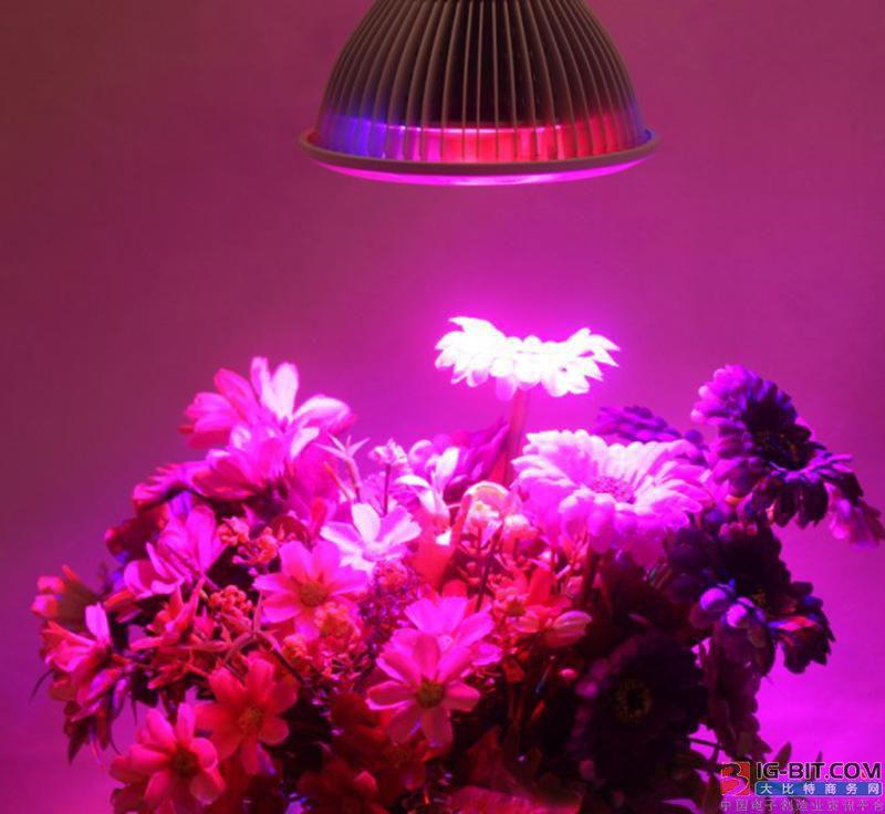 英企为2.9万平米温室提供LED生长灯