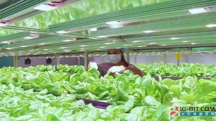 6600平米植物工厂建成投产:具备自主LED照明技术