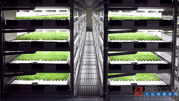 LED照明垂直农场