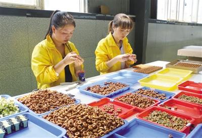 贵州六盘水用电子产业带动就业
