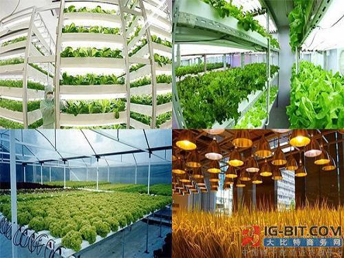 LED照明助力,荷兰企业冬天期间成功种植、收获果实