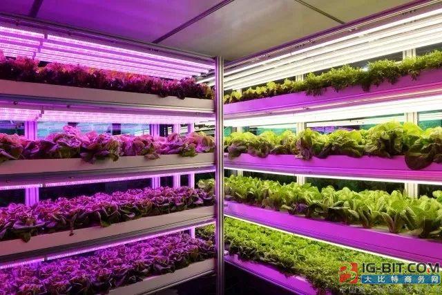 日亚携手荷兰农业公司开拓LED园艺照明市场