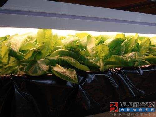 从日本LED照明植物工厂我们可以学到什么?
