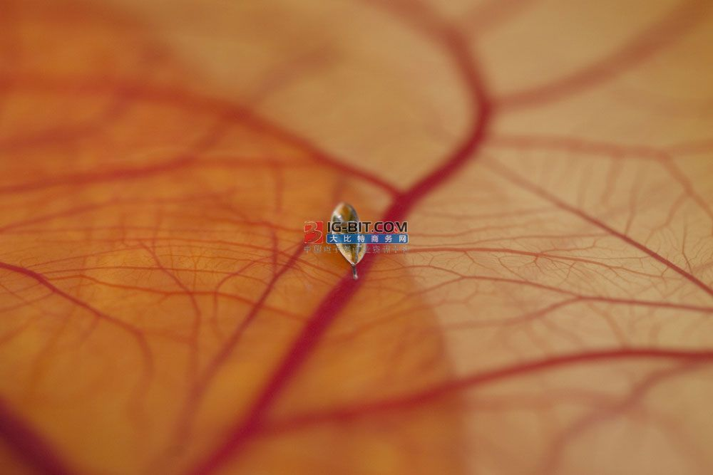 """抗癌机器人能在血管里""""跑酷"""" 直径小至3微米 每秒移动600微米"""