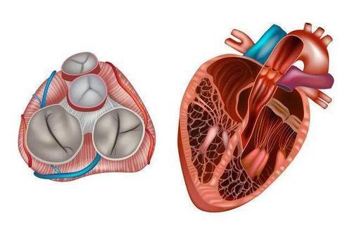心脏介入器械企业科凯生命科学完成数亿元B轮融资