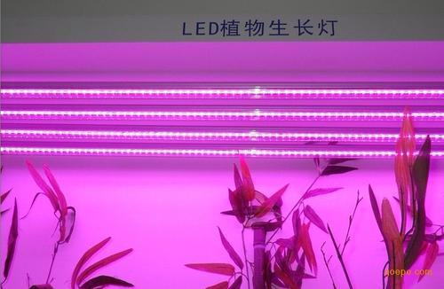 唐国庆专栏:LED植物照明的四个新趋势