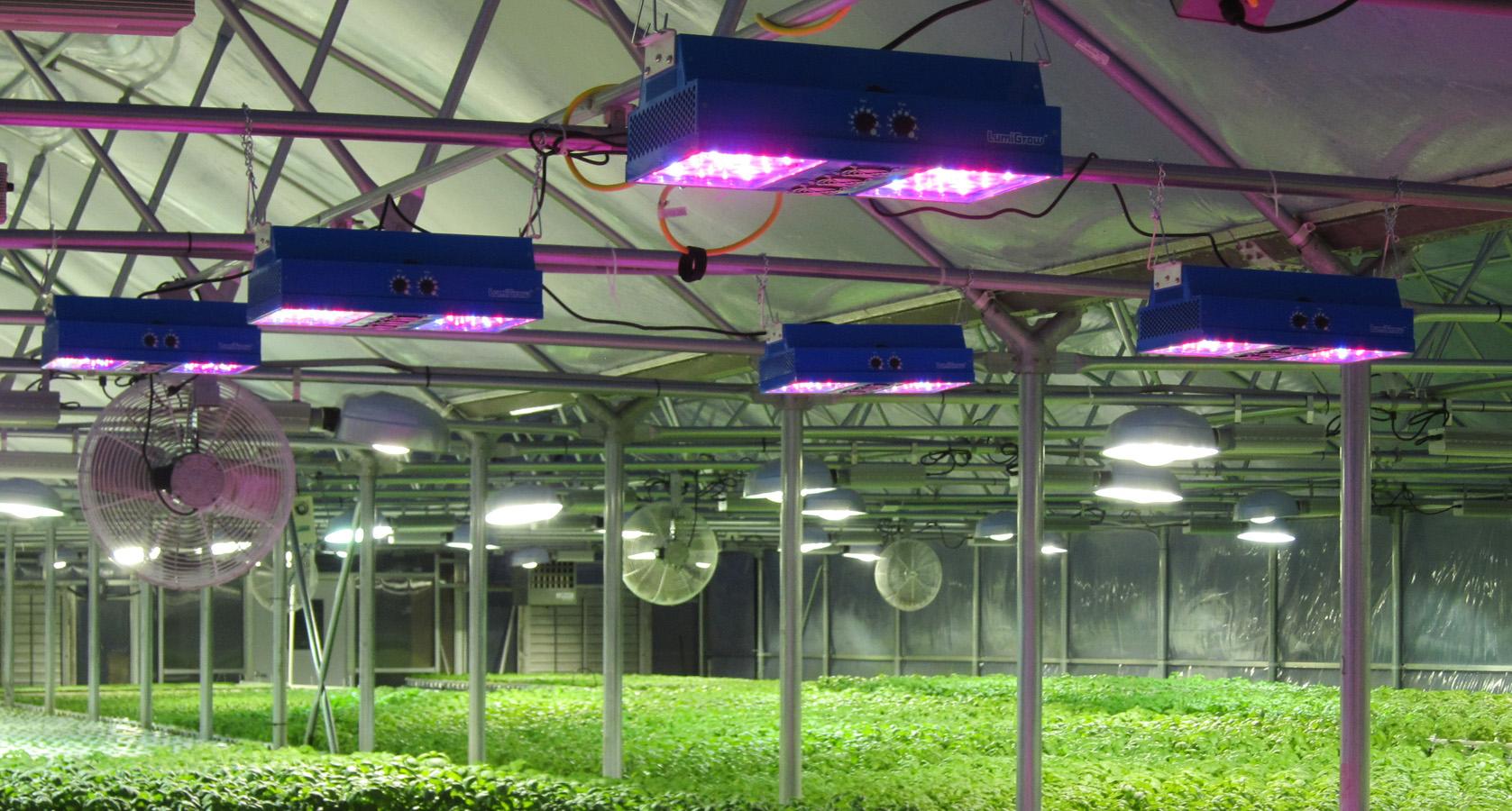 """日新月异!LED植物照明非主流中""""生长"""""""