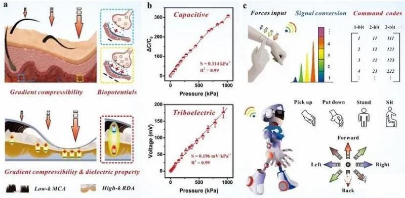 澳门大学研发出自供电可穿戴仿生触觉传感器