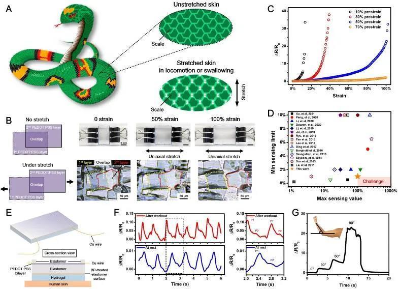 【突破】西安交大在柔性器件力学结构设计与智能柔性传感领域取得新成果
